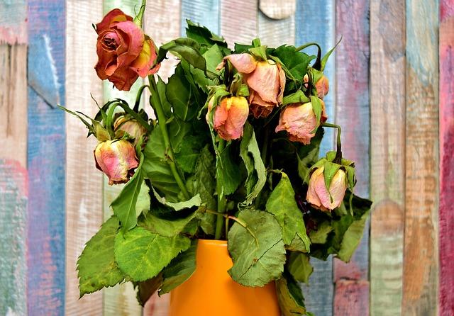 zvadlé růže